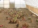 密云顺义温室大棚,蔬菜大棚,大棚厂家,大棚建造,大棚搭建价格