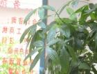 广东东润会计快速代理注册,代办劳务派遣,代理记账