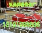 两个位双体母猪产床整套分娩产床仔猪育肥高栏厂家直销