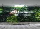 天津植物墙生态墙绿植墙五色草花坛垂直绿化舍德园林工程有限公司