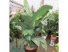 南京办公室绿植租赁销售 专业植物养护 来电优惠