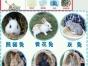 宠物兔垂耳兔猫猫兔侏儒兔68元起可自提可快递送货上