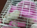 特别可爱的小仓鼠