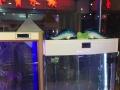 专业上门鱼缸清洗消毒,安装维修,水泵灯具更换,
