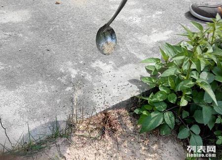 东莞横沥白蚁防治,洪梅白蚁防治中心,沙田白蚁防治所