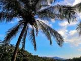 合肥出发到海南三亚双飞5日旅游