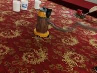 朝阳清洗地毯公司地板打蜡百子湾开荒保洁找明亮保洁