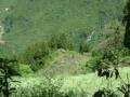 兴山高岚整个村子土地流转90万