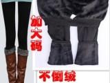 冬季加厚打底裤加大码400克打底裤保暖不倒绒打底裤女装打底裤