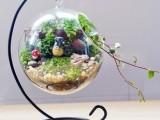 微景观玻璃吊球 铁艺吊件 苔藓微景观玻璃斜口玻璃圆球挂件
