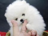厦门宠物狗领养中心 只需身份证实名领养