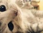 宠物检疫,治疗,寄养