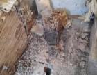 石湾预防白蚁所 园洲预防白蚁中心 龙溪白蚁防治站 老品牌