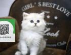 柳州在哪里卖健康纯种宠物猫 柳州哪里出售金吉拉