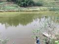 低价转让泸州市泸县石桥镇6亩坑塘水面