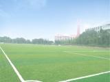 广东深圳人造草坪足球场工程造价 人造草材料厂家 人造草坪施工