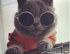 加菲猫价格表 淘宝店铺搜:双飞猫