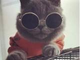 纯种豹猫 店铺搜:双飞猫