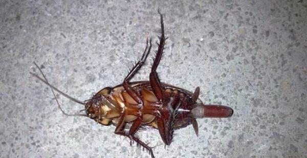灭蟑螂 灭老鼠 酒店老鼠蟑螂的克星,找宜家除害公司