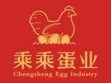 鸡蛋批发货源找乘乘蛋业,价格公道,品质稳定,货源可靠