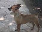 北京朝阳公园丽水家园小区寻找爱犬