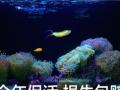 养花一样养珊瑚~专业鱼缸定制超白海缸保活~水族草缸