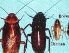 家庭发现蟑螂找利龙一次根除无效双倍退款承保