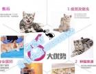 萌猫舍出售出英短蓝猫渐层蓝白折耳美短起司