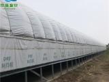寧津限世瑞畜牧設備搭建養豬大棚 防火保溫大棚