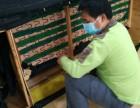 深圳光明新区真皮沙发翻新 欧式沙发换皮
