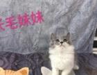 蓝猫宝宝求饭票!低价出哦!
