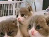 基地几千只各品种猫咪等你来选