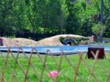 配享超大游泳池豪华宠物酒店 做寄养,我们是专业的