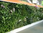 兰州植物墙绿植墙盆景租摆