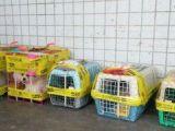 宠物托运 十长沙到张家界需要多少钱几个小时到