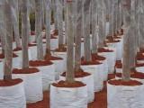 美植袋植树袋种植袋厂家哪家更专业 博一化纤