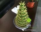 上海花卉绿植租摆销售写字楼办公室酒店价格低免费配送