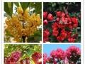批发零售各种景观树苗、风景树苗,品种齐全