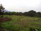 从化温泉中田附近3.5亩果园平地永久转让