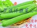长安蔬菜配送 长安蔬菜批发 长安工厂食材批发