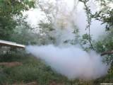 英达大棚果园打药机 脉冲烟雾机水雾两用机 高压汽油动