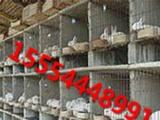 山东獭兔价格,肉兔种兔价格,獭兔种兔价格
