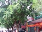 海珠区工业大道南大型汽修汽车美容店转让租铺客