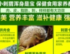 黑龙江刺猬养殖 刺猬肉 刺猬种苗药材刺猬批发
