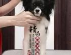 天津纯种蝴蝶犬幼犬价格