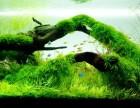 鱼缸草缸清理修剪维护及造景
