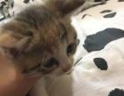 自家生养小猫咪一个月10天啦