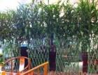 绿植租摆,花卉租赁,园林绿化,庭院设计开业花篮