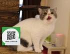 南阳哪里有加菲猫出售 南阳加菲猫价格 南阳宠物猫转让出售