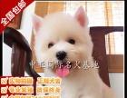 宠物狗 纯种西高地幼犬 视频看狗 免费送货上门